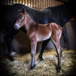 Colt Sire: Call Me Mitch Dam: Docs Shiney Amber
