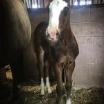 Colt Sire: The Wow Factor Dam: Britts Detailed Girl
